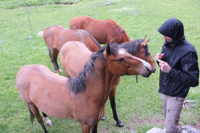 Горные лошади и путник