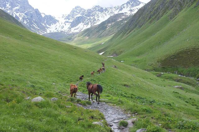 Грузия, Чаухи, горные лошади
