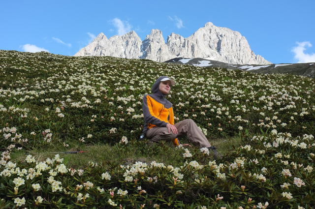 Рододендроны на горе Чаухи и путник